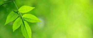Green Window Program