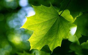 Home Window Instant Green Rebate